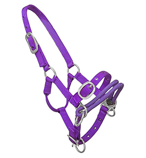 Training Horse Halter