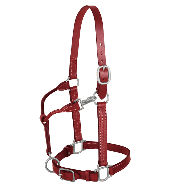 Comfortable Fancy Leather Halter